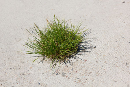 Survival  Grass with difficulty breaking through concrete in the urban environment Stock Photo