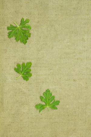 fibered: Dry plants on green coarse cloth. Purchases for scrapbooking.
