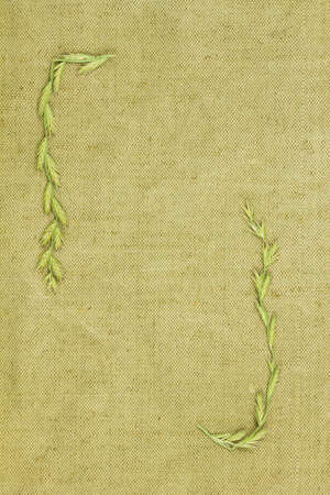 Dry plants on green coarse cloth. Purchases for scrapbooking.