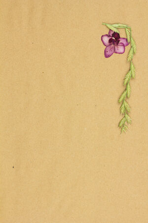 Dry plants on beige paper. Procurement for scrapbooking. Stock Photo
