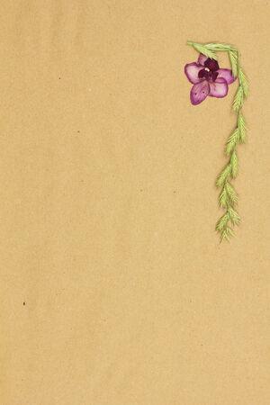 Dry plants on beige paper. Procurement for scrapbooking. photo