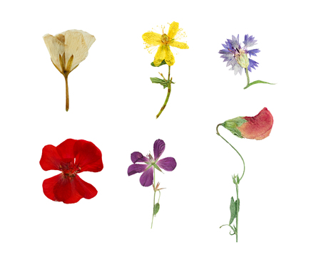 Pressed and dried six flowers isolated on white background.  Hypericum, cornflower, geranium, pelargonium.