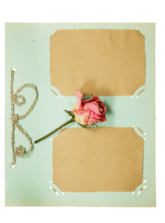 old album: Page from an old album pistachio color. Decorated flower dry rose. Isolated on white background.