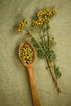 medicinal herbs: Tansy. Dried herbs for use in alternative medicine. Herbal medicine, phytotherapy medicinal herbs. For the preparation of infusions, decoctions, tinctures, powders, ointments, tea. Background green cloth