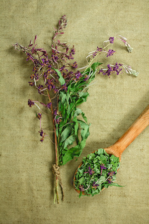 medicinal herbs: Fireweed, willow-herb. Dried herbs for use in alternative medicine. Herbal medicine, phytotherapy medicinal herbs. For the preparation of infusions, decoctions, tinctures, powders, ointments, tea. Background green cloth