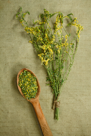 medicinal herbs: Melilot, sweet clover. Dried herbs for use in alternative medicine. Herbal medicine, phytotherapy medicinal herbs. For the preparation of infusions, decoctions, tinctures, powders, ointments, tea. Background green cloth
