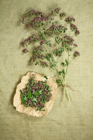phytotherapy: Oregano.Dried herbs for use in alternative medicine.Herbal medicine, phytotherapy medicinal herbs.For preparation of infusions, decoctions, tinctures, powders, ointments, tea.Background green cloth