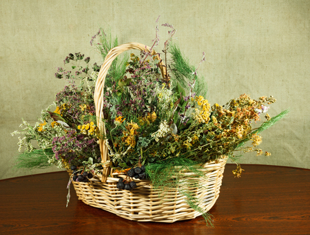 phytotherapy: Basket with healing herbs. Dried plant for use in alternative medicine. Herbal medicine, phytotherapy medicinal herbs. For preparation of infusions, decoctions, tinctures, powders, ointments, tea.
