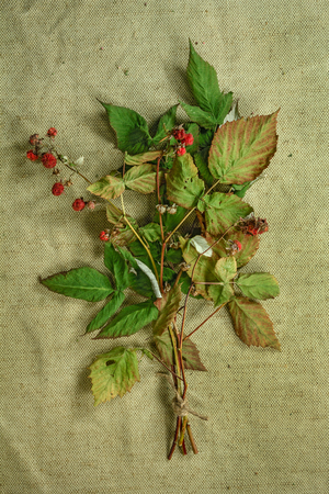 phytotherapy: Raspberry.Dried herbs for use in alternative medicine.Herbal medicine, phytotherapy medicinal herbs.For preparation of infusions, decoctions, tinctures, powders, ointments, tea. Background green cloth