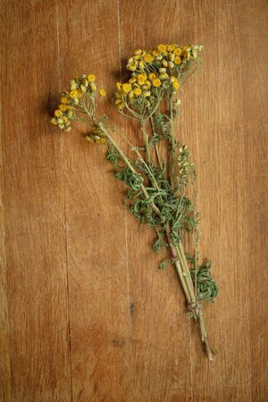 herbal cosmetics: Tansy. Dried herbs for use in alternative medicine, spa, herbal cosmetics, herbal medicine, preparing infusions, decoctions, tinctures, powders, ointments, butter, tea, bath. Stock Photo