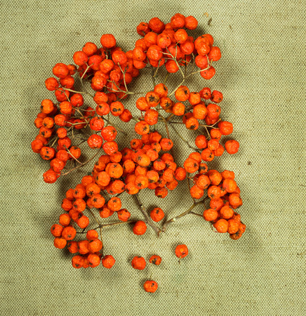 herbal cosmetics: Rowan, rowanberry. Dried herbs for use in alternative medicine, spa, herbal cosmetics, herbal medicine, preparing infusions, decoctions, tinctures, powders, ointments, butter, tea, bath.