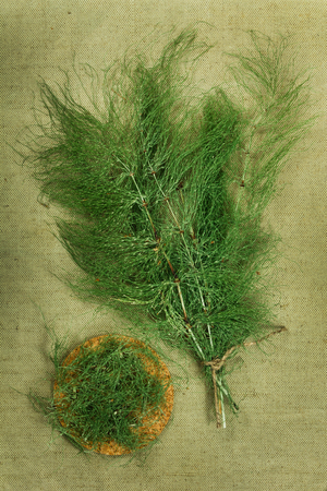herbal cosmetics: Equisetum, horsetail. Dried herbs for use in alternative medicine, spa, herbal cosmetics, herbal medicine, preparing infusions, decoctions, tinctures, powders, ointments, butter, tea, bath.