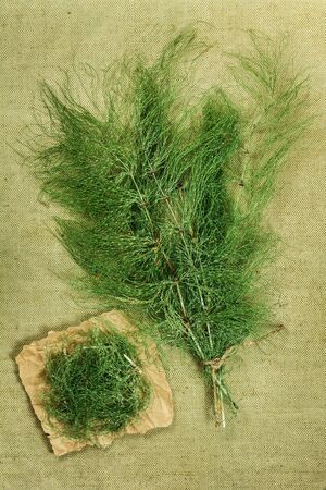 herbal cosmetics: Equisetum, horsetail,. Dried herbs for use in alternative medicine, spa, herbal cosmetics, herbal medicine, preparing infusions, decoctions, tinctures, powders, ointments, butter, tea, bath. Stock Photo