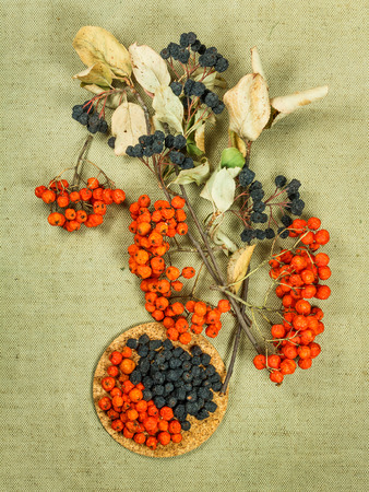 herbal cosmetics: Rowan, rowanberry, Chokeberry, aronia . Dried herbs for use in alternative medicine, spa, herbal cosmetics, herbal medicine, preparing infusions, decoctions, tinctures, powders, ointments, butter, tea, bath. Stock Photo