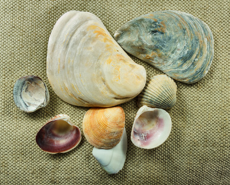 Collection of sea shells mollusc. Shells of marine mollusks are on the rough canvas fabric.