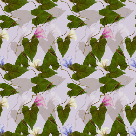 calystegia sepium, bindweed, (convolvulus, morning-glory). Colorful texture of pressed dry flowers. Seamless pattern for continuous replicate. Beautiful photo collage.