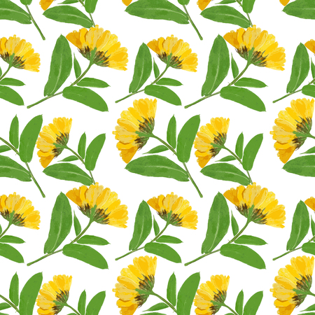 calendula: Marigold, calendula officinalis. Colorful texture of pressed dry flowers. Seamless pattern for continuous replicate. Beautiful photo collage.