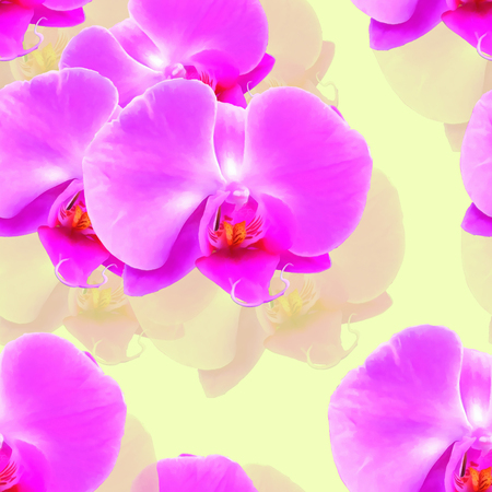 Orchid, Phalaenopsis. Texture of flowers. Seamless pattern for continuous replicate. Floral background, photo collage for production of textile, cotton fabric. For use in wallpaper, covers. Stock Photo