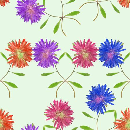 Aster, Michaelmas daisy. Texture of flowers. Seamless pattern for continuous replicate. Floral background, photo collage for production of textile, cotton fabric. For use in wallpaper, covers.