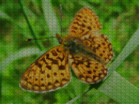 green cross: Illustrations. Cross-stitch. Large butterfly on a blade of grass in a field.