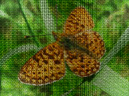 punto de cruz: Ilustraciones Punto de cruz. Mariposa grande en una brizna de hierba en un campo.