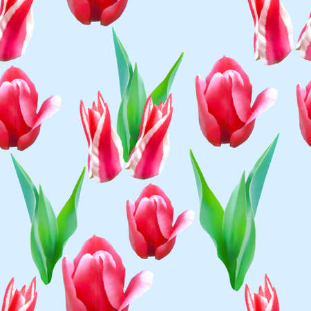 Tulip. Texture of flowers. Seamless pattern for continuous replicate. Floral background, photo collage for production of textile, cotton fabric. For use in wallpaper, covers Stock Photo
