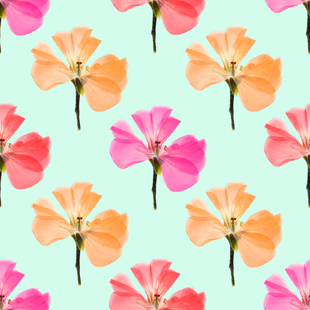 Geranium, pelargonium. Texture of flowers. Seamless pattern for continuous replicate. Floral background, photo collage for production of textile, cotton fabric. For use in wallpaper, covers Stock Photo