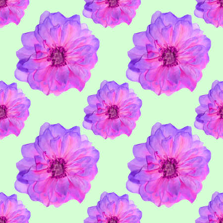 Briar, wild rose. Texture of flowers. Seamless pattern for continuous replicate. Floral background, photo collage for production of textile, cotton fabric. For use in wallpaper, covers