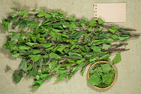 Birch. Dry plants for use in alternative medicine, phytotherapy, spa, herbal cosmetics. Preparing infusions, decoctions, tinctures. Used in powders, ointments, butter, tea, bath Reklamní fotografie - 96058811