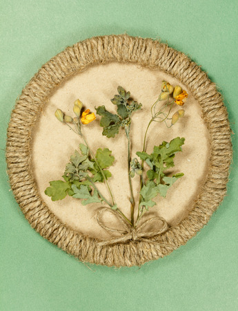 Herbarium. Celandine. Dry plants in framework made of jute thread. Scrapbooking. Dried flower.