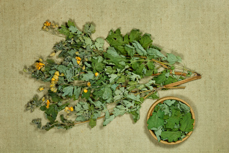 Celandine. Dry herbs for use in alternative medicine, phytotherapy, spa, herbal cosmetics. Preparing infusions, decoctions, tinctures. Used in powders, ointments, butter, tea, bath