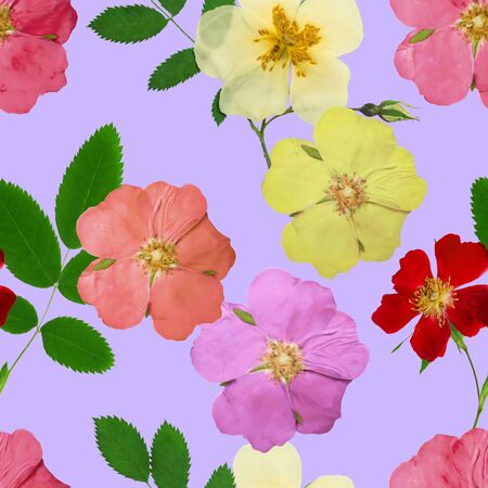 Briar, wild rose, dog-rose. Texture of flowers. Seamless pattern for continuous replicate. Floral background, photo collage for production of textile, cotton fabric. For use in wallpaper, covers