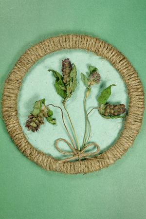 Herbarium. Prunella vulgaris, Clover, trefoil. Dry plants in framework made of jute thread. Scrapbooking. Dried flower.