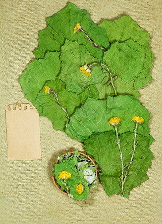 Coltsfoot, foalfoot. Dry herbs for use in alternative medicine, phytotherapy, spa, herbal cosmetics. Preparing infusions, decoctions, tinctures. Used in powders, ointments, butter, tea, bath