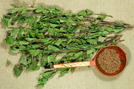Birch. Dry plants for use in alternative medicine, phytotherapy, spa, herbal cosmetics. Preparing infusions, decoctions, tinctures. Used in powders, ointments, butter, tea, bath Reklamní fotografie - 105066480