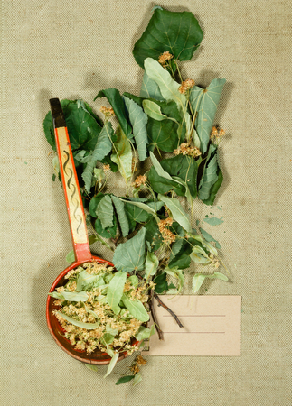 Linden. Dry plants for use in alternative medicine, phytotherapy, spa, herbal cosmetics. Preparing infusions, decoctions, tinctures. Used in powders, ointments, butter, tea, bath