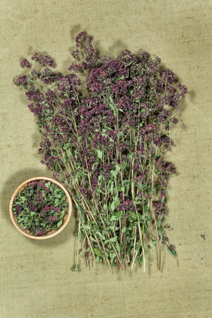 Oregano. Dry herbs for use in alternative medicine, phytotherapy, spa, herbal cosmetics. Preparing infusions, decoctions, tinctures. Used in powders, ointments, butter, tea, bath