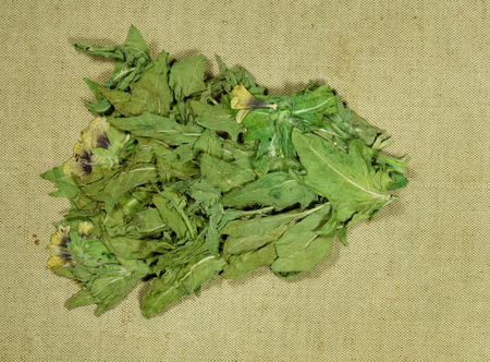 Black henbane, hyoscyamus niger. Dry herbs for use in alternative medicine, phytotherapy, spa, herbal cosmetics. Preparing infusions, decoctions, tinctures. Used in powders, ointments, butter, tea, bath