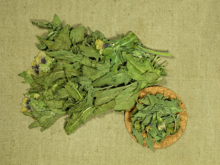 Black henbane. Dry herbs for use in alternative medicine, phytotherapy, spa, herbal cosmetics. Preparing infusions, decoctions, tinctures. Used in powders, ointments, butter, tea, bath 免版税图像