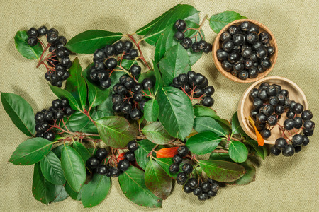 Chokeberry, aronia. Dry plants for use in alternative medicine, phytotherapy, spa, herbal cosmetics. Preparing infusions, decoctions, tinctures. Used in powders, ointments, butter, tea, bath
