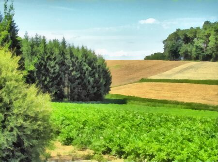 Watercolor summer landscape. Forest and field with sown agricultural crops. Digital painting. Drawing watercolor.