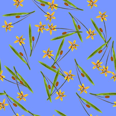 Bluebell, scilla, primroses. Texture of flowers. Seamless pattern for continuous replicate. Floral background, photo collage for production of textile, cotton fabric. For use in wallpaper, covers