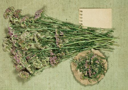 Yarrow. Dry herbs for use in alternative medicine, phytotherapy, spa, herbal cosmetics. Preparing infusions, decoctions, tinctures. Used in powders, ointments, butter, tea, bath
