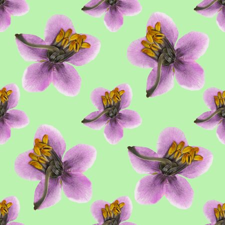 Pyrola. Texture of flowers. Seamless pattern for continuous replicate. Floral background, photo collage for production of textile, cotton fabric. For use in wallpaper, covers