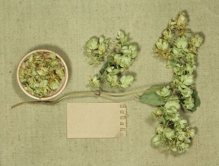 Wild hop. Dry herbs for use in alternative medicine, phytotherapy, spa, herbal cosmetics. Preparing infusions, decoctions, tinctures. Used in powders, ointments, butter, tea, bath Banco de Imagens
