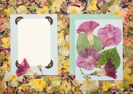 Background of fragments of broken flowers and leaves. Scrapbooking element is made up of flowers, petals, frames, cornerÑ‹. Rustic, country style album page in scrapbook with frames for photo. Stock fotó