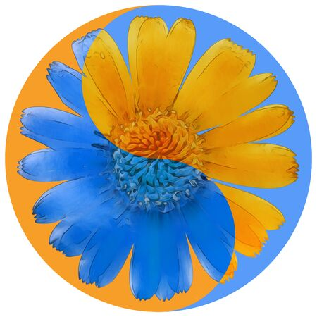 Floral symbol Yin-Yang. Calendula. Geometric pattern of Yin-Yang symbol, from plants on colored background in Oriental style. Yin Yang symbol from flowers, petals. Flower illustration of mandala.