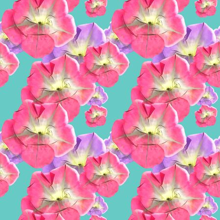 Petunia. Illustration, texture of flowers. Seamless pattern for continuous replicate. Floral background, photo collage for production of textile, cotton fabric. For use in wallpaper, covers 스톡 콘텐츠