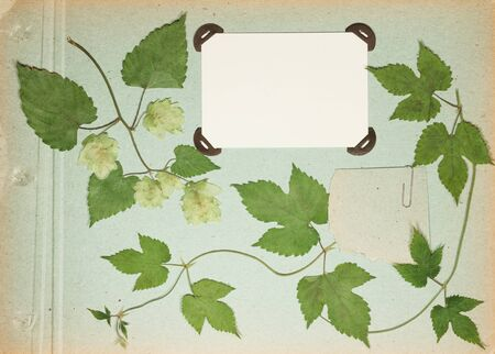 Page from an old photo album pistachio color. Scrapbooking element decorated with leaves, flowers and petals wild flowers. Rustic, country style album page in scrapbook with frames for photo.  스톡 콘텐츠