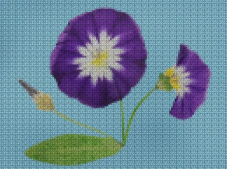Illustration. Cross-stitch bouquet of flowers. Wildflowers. Bindweed, convolvulus, morning-glory. Floral background, collage.  Flowers texture. Cross-stitching rustic or country style.